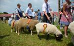 Najlepsze owce
