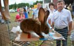 Po raz pierwszy odbyła się w Szepietowie krajowa wystawa królików