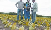 Do plantatorów już teraz zgłasza się mnóstwo firm zainteresowanych zakupem tytoniu – mówi Jan Milanowski (pierwszy z prawej)