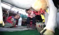 Na targach Agrotravel  dzieci mogły nawet zobaczyć... jak działa krowa i spróbować produktów wyrabianych naturalnymi metodami z mleka. Wystawa była dla maluchów z miasta rzadka do tego okazją.