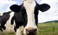 Mleko Ekologiczne od OSM Piątnica