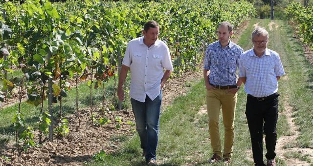 – Pierwsze zbiory zaplanowaliśmy na 2014 rok – mówią Tomasz Kasicki (od lewej) oraz Jacek i Zbigniew Turnauowie.