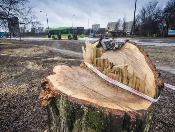 Jacek Jaśkowiak o wycince drzew w Poznaniu będzie rozmawiał z Adamem Wajrakiem