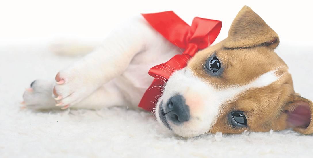 Pies nie może być nieudanym prezentem [ROZMOWA z Miriam Gołębiewską]