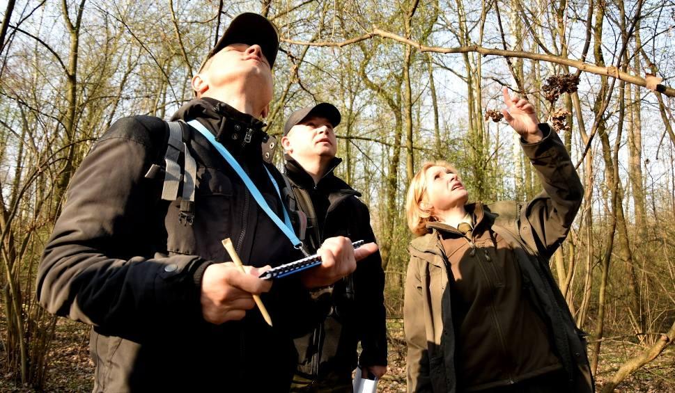 Film do artykułu: Tarnobrzeg. Komisja chce ochronić 170 drzew w Zwierzyńcu. Zdecydują radni
