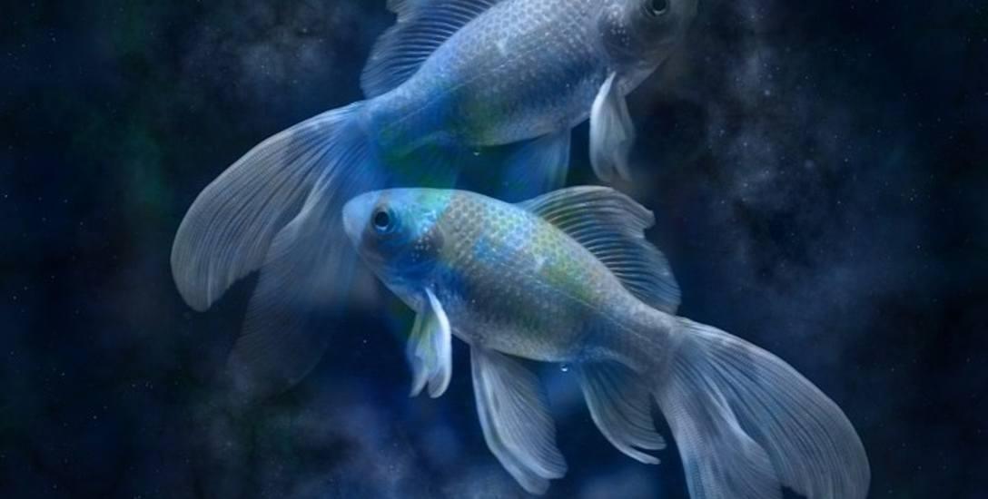 Ryby (19 lutego - 20 marca)