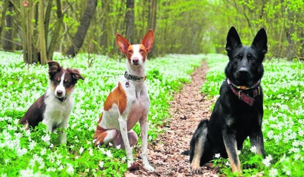 Film do artykułu: Psie Seminarium po raz drugi w Stalowej Woli