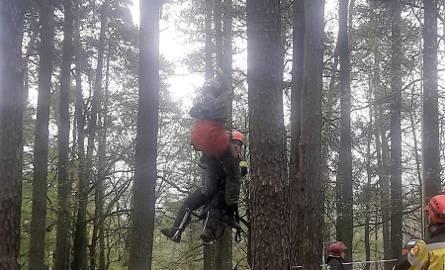 Spadochroniarz na drzewie w Rybniku