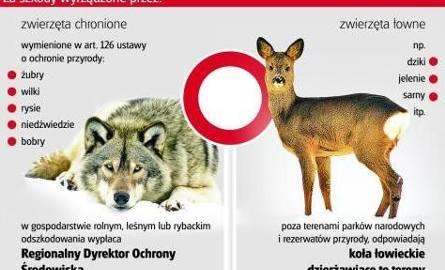 Kto odpowiada za szkody wyrządzone przez dzikie zwierzęta