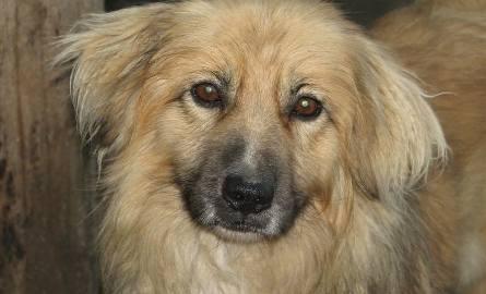 Piękna Dina i inne psy czekają na domy