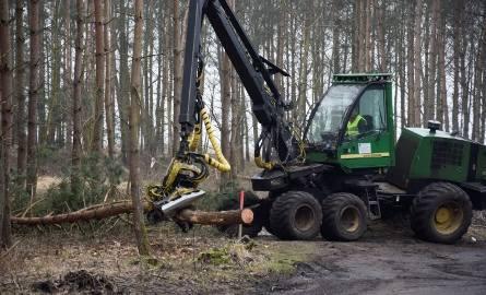 Mierzeja Wiślana. Wyrąb lasu pod teren budowy przekopu Mierzei Wiślanej [15.02.2019]
