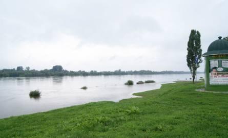 Grudziądz. Wisła zalewa błonia. W piątek wieczorem poziom wody sięgnie 520 cm
