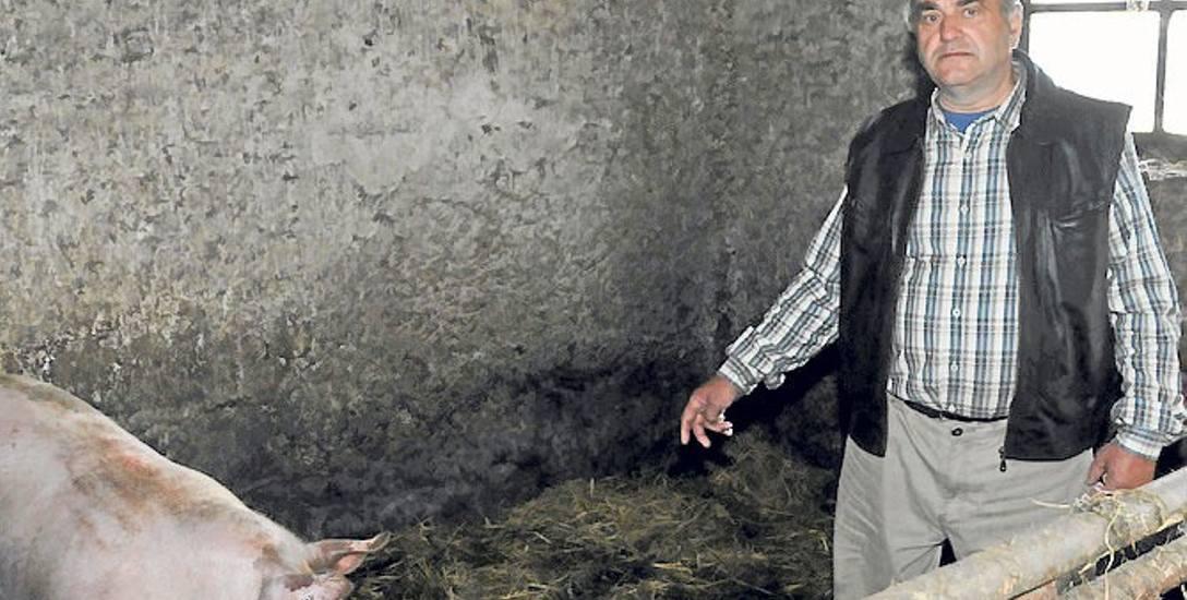 - Mam zabić swoje wszystkie świnie, nawet 4 prośne lochy. Z dnia na dzień moje życie straciło sens - mówi Jerzy Jaworski.