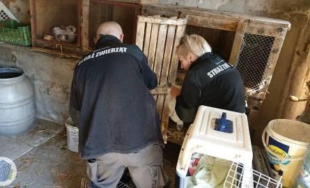 Wstrząsającego odkrycia dokonano w Śliwnikach niedaleko Nowych Skalmierzyc. Okazało się, że właściciel jednego z gospodarstw zabił dwa psy, w tym ciężarną