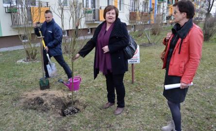Drzewo w miejscu wskazanym przez spółdzielnię posadzili Dariusz Przytuła, Renata Butryn i Małgorzata Czwarno-Sieroń
