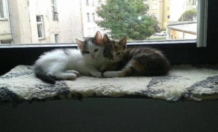 Te koty szukają domu. Ferdek (nie z Kiepskich) i Gapcio do przygarnięcia! (ZDJĘCIA)