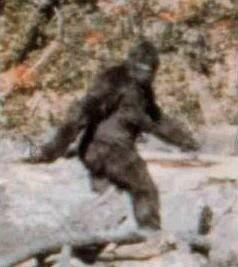 Kadr z filmu Pattersona