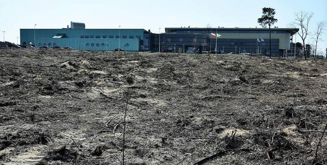 Koło CRS wycięto drzewa pod budowę salonu meblowego