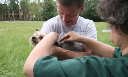 Obowiązkowe czipowanie psów? Ma pomóc samorządom w walce z bezdomnością zwierząt