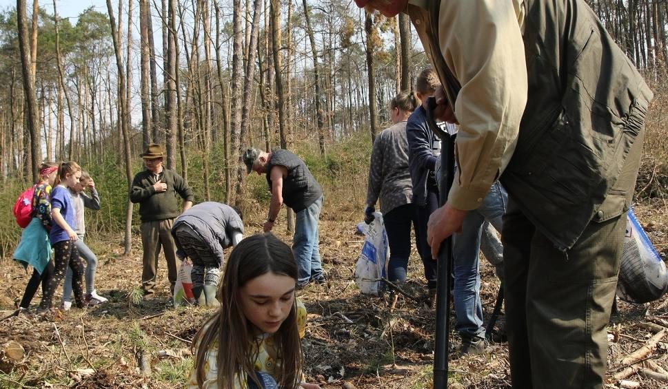 Film do artykułu:  Sześćdziesiąt osób sadziło drzewa w nadleśnictwie Jędrzejów