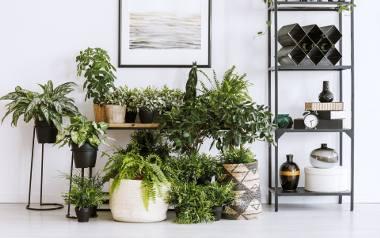Rośliny, które ocieplą każde wnętrze: Kiedyś podbiły serca naszych babć, teraz znów są w modzie. Zobacz piękne, kwiatowe inspiracje ZDJĘCIA