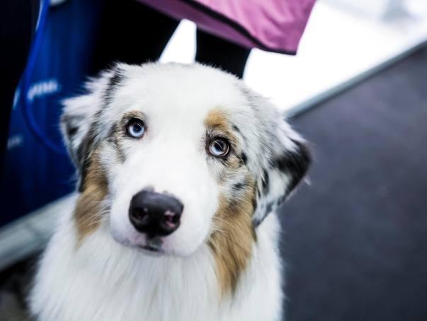 W 2020 roku omawiana w niniejszym artykule opłata nie może przekroczyć 125,40 zł rocznie od jednego psa. To o ponad 2 złote więcej niż trzeba było płacić