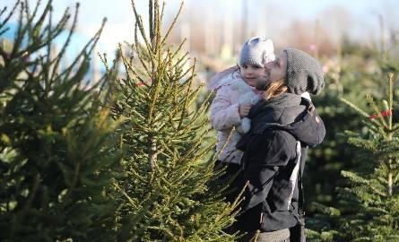 Wciąż najpopularniejsze są świerkowe drzewka, chociaż mieszkańcy naszego regionu coraz częściej decydują się na jodły kaukaskie a nawet sosny. Wybór