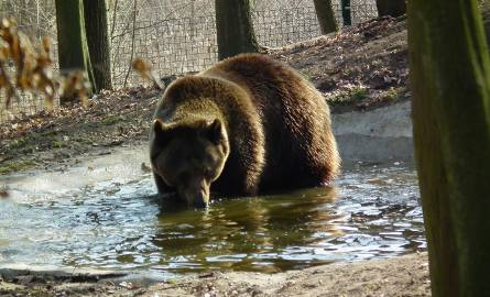 150 tysięcy euro na azyl dla niedźwiedzi