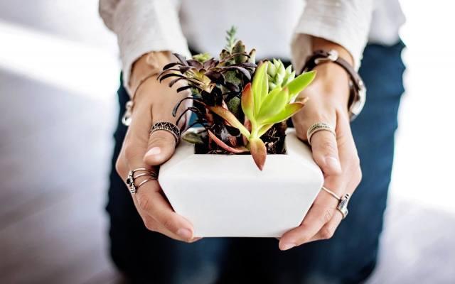 Sukulenty nazywane są roślinami dla zapominalskich. Dlatego są idealnym pomysłem na prezent dla osoby, która lubi kwiaty doniczkowe, ale nie pamięta