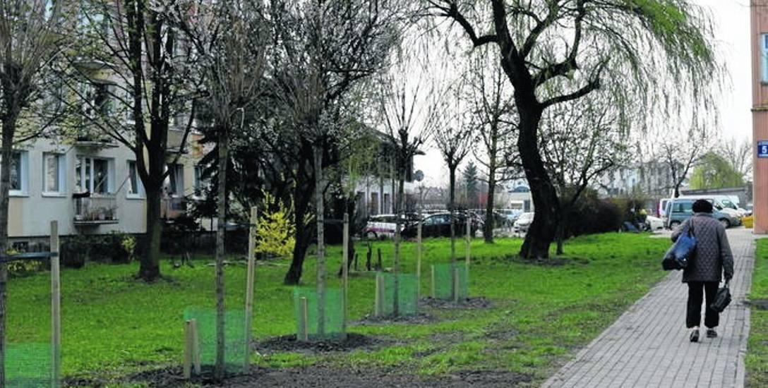 SSM posadziła drzewa tam, gdzie je wcześniej ścięła