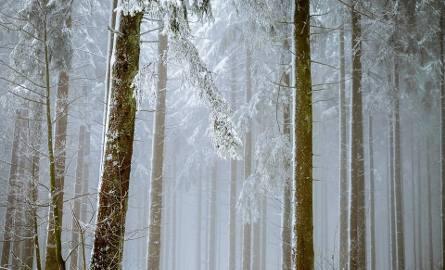 Długoterminowa prognoza pogody na styczeń. Jaka będzie wyglądać druga połowa miesiąca?