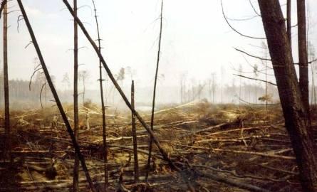 Już kilka tygodni po zagaszeniu ognia, wywiezieniu spalonej zwierzyny cisza ustąpiła. Wróciły ptaki. Siadały na opalonych drzewach.