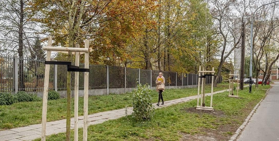 W Łodzi trwa jesienna akcja sadzenia drzew na ulicach, rondach, w parkach