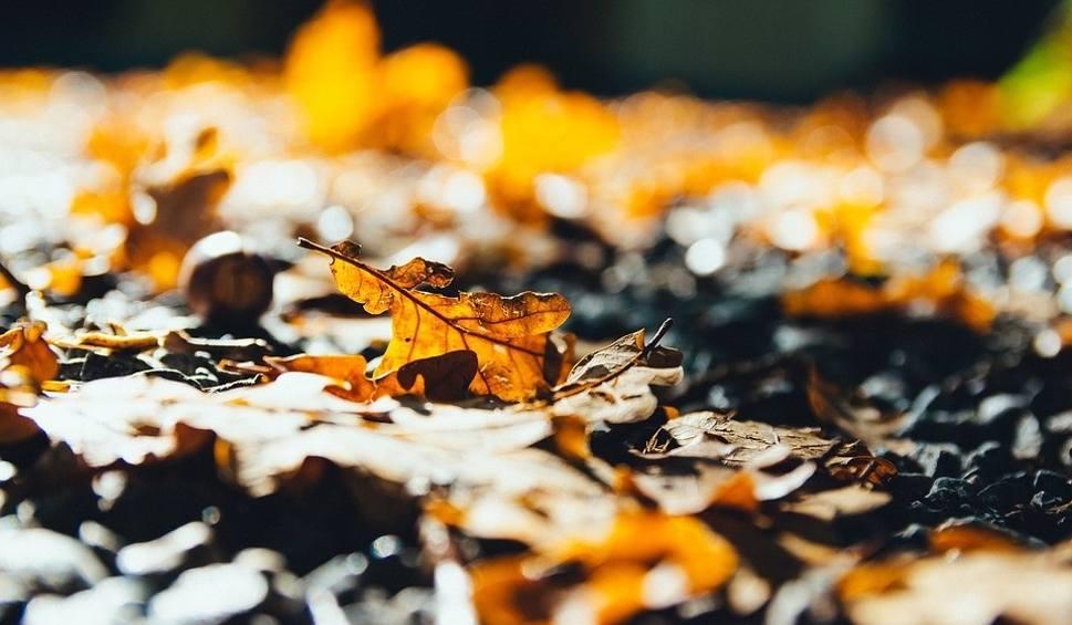Film do artykułu: Pogoda na dziś: Czwartek, 7 listopada. Wielkopolska, Poznań - prognoza pogody [Poznań, Leszno, Kalisz, Konin, Gniezno, Piła]