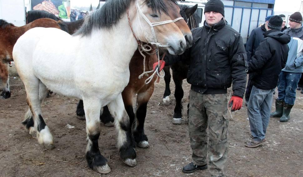 Film do artykułu: Wstępy 2016. Już niedługo konie zjadą do Skaryszewa