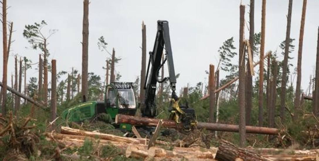 """Lasy szumią, że mogą """"połknąć"""" więcej węgla i przysłużą się klimatowi"""