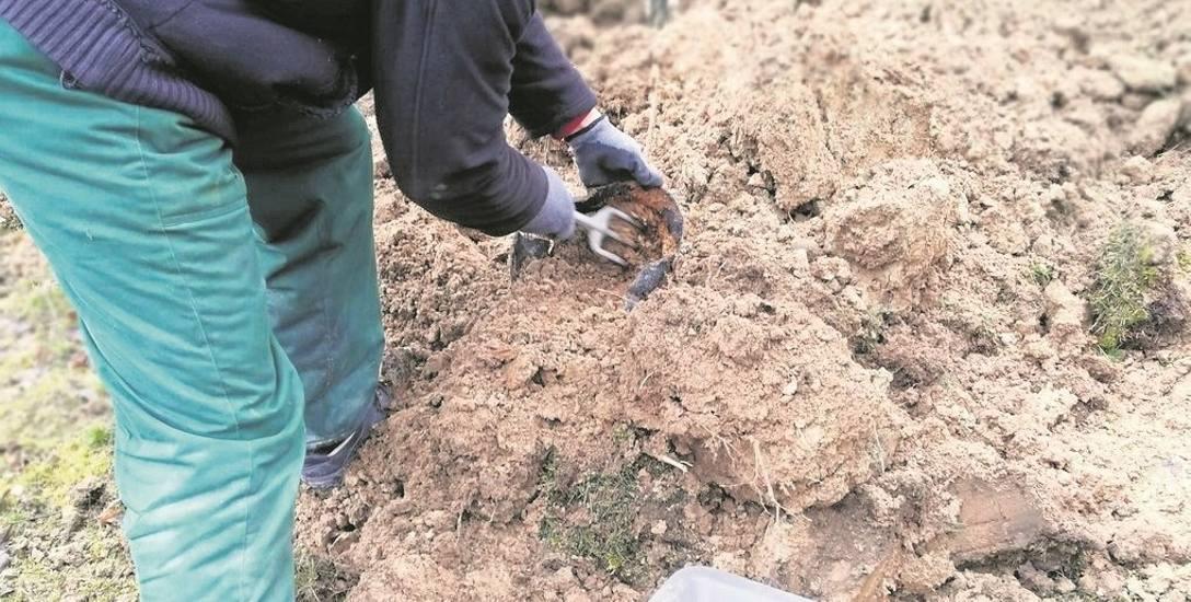 Marcowa ekshumacja szczątków żołnierzy Wehrmachtu, pochowanych w zbiorowej mogile przy ulicy Starowiejskiej w Ryczowie. Znaleziono m.in. fragmenty kości,