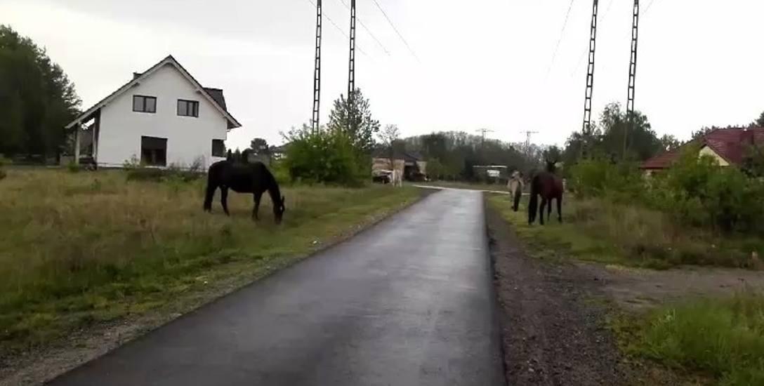 Konie są spokojne, ale stwarzają na drodze niebezpieczeństwo - mówią mieszkańcy