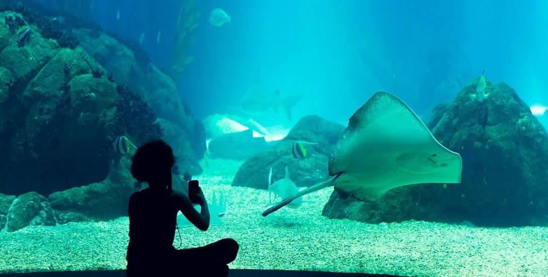 Co z oceanarium w Kołobrzegu? Radni spotkali się z wrocławską spółką PFI Future