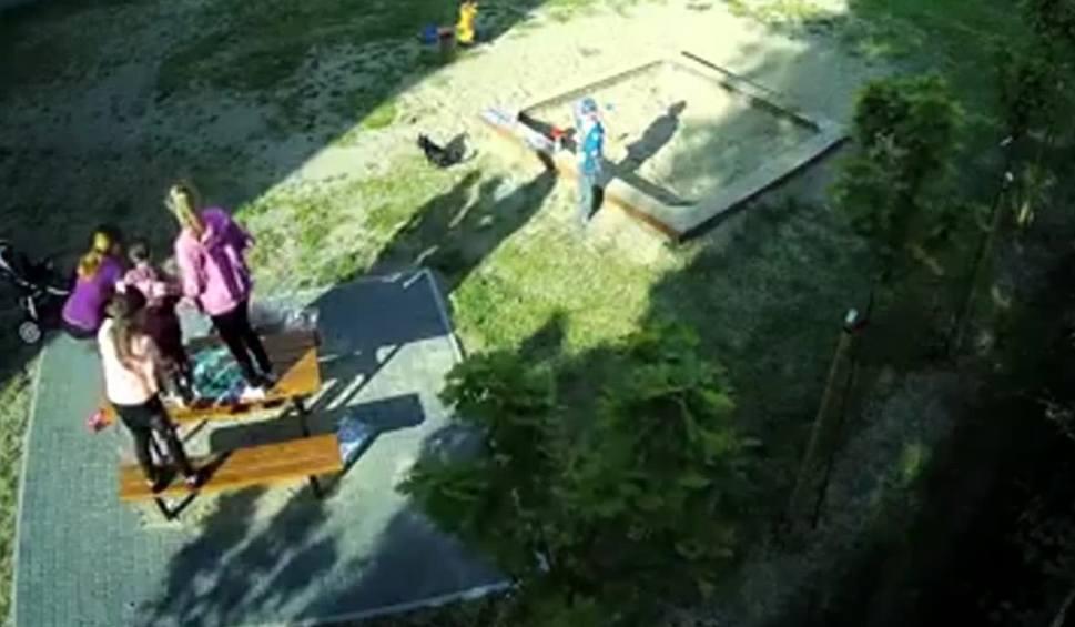 Film do artykułu: INFO Z POLSKI: Nieupilnowany bulterier zaatakował dzieci na placu zabaw