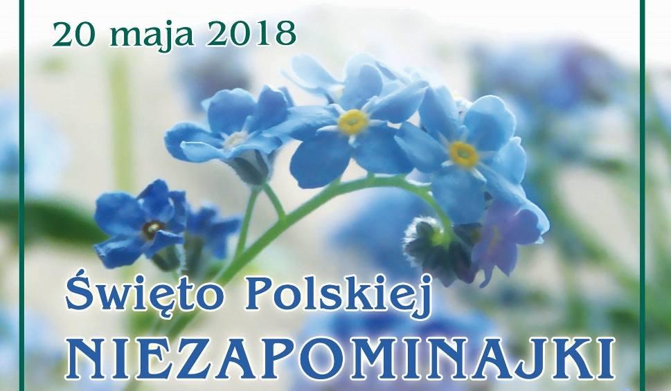 Film do artykułu: Gmina Jedlnia-Letnisko. Święto Polskiej Niezapominajki. Będzie piknik, kiermasz i koncert Papa D
