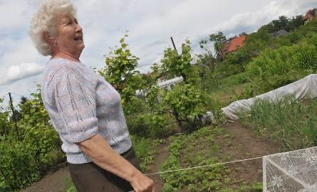 Elżbieta Grandke musi swoje róże okrywać na noc firanami, żeby uchronić je przed sarnami