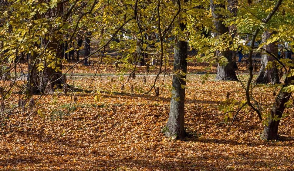 Film do artykułu: Prognoza pogody na 6 i 7 października w województwie podlaskim. Będzie coraz chłodniej! (zdjęcia, wideo)