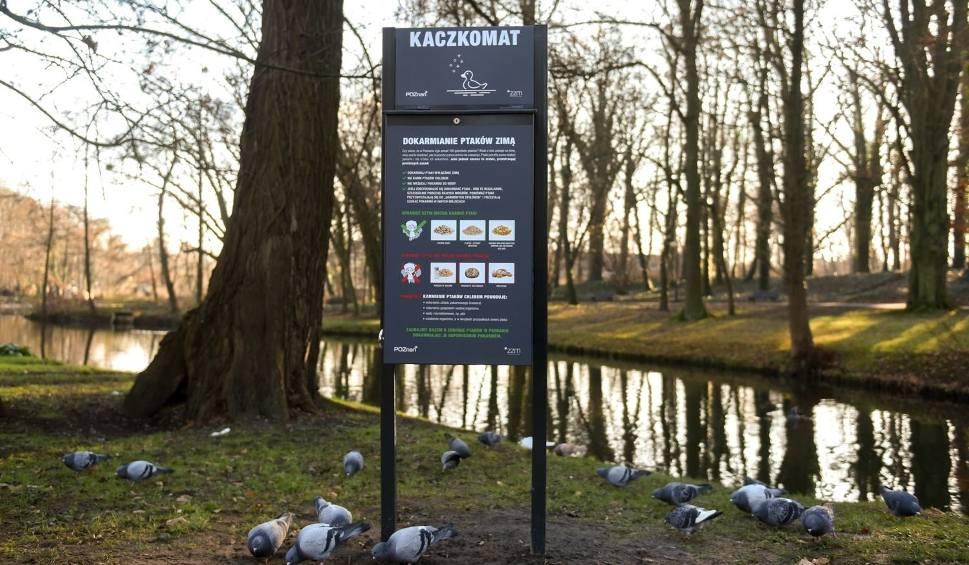 Film do artykułu: Czym dokarmiać ptaki w parkach i na skwerach? Karma z automatów lepsza niż suchy chleb