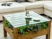 Piękne rośliny w Twoim domu