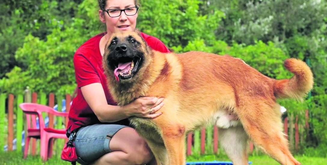 Czterysta rzeczy na bazarku - pomoc dla psa Axla ze schroniska