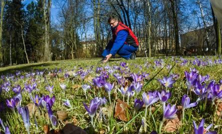 Kalendarzowa wiosna rozpoczęła się 21 marca. Astronomiczna jest już z nami od 20.03. W botaniku przy UKW przyroda budzi się do życia. Szukamy wiosny,