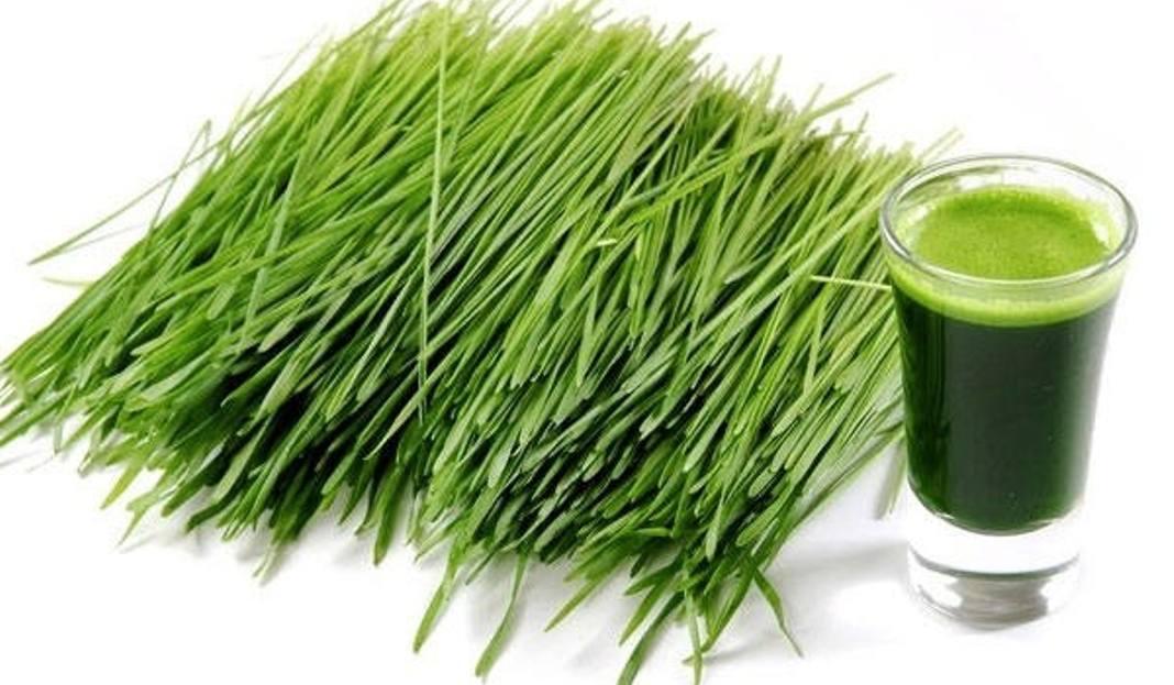 młody zielony jęczmień w proszku gdzie kupić