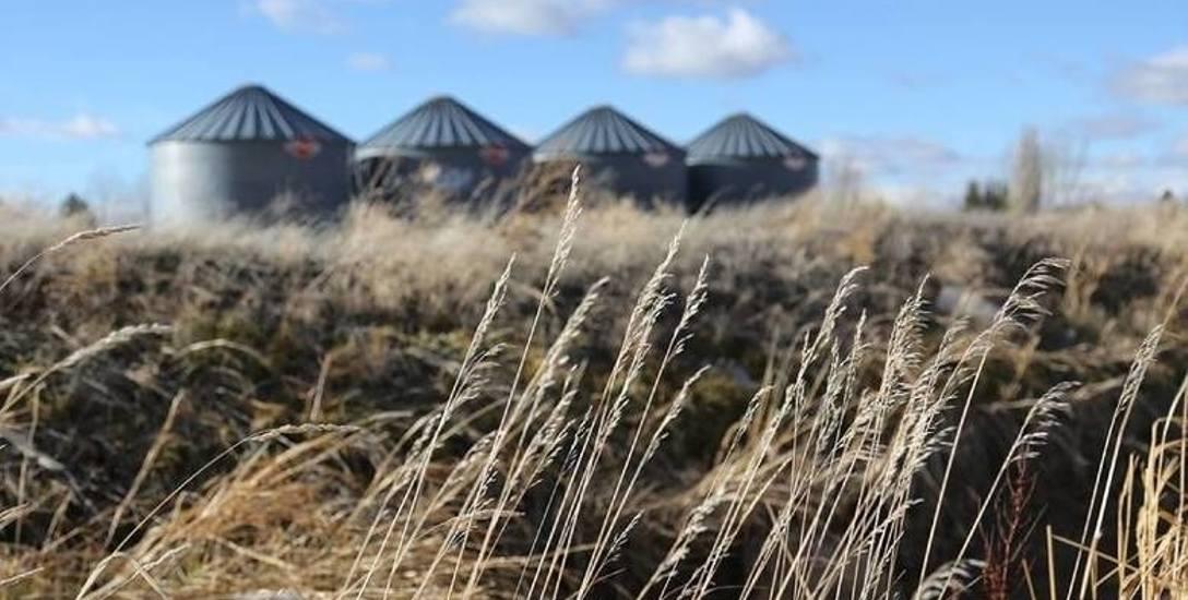 800 rolników z naszego regionu mogło zostać oszukanych przez firmę skupującą płody rolne. Prokuratura w Toruniu prowadzi śledztwo