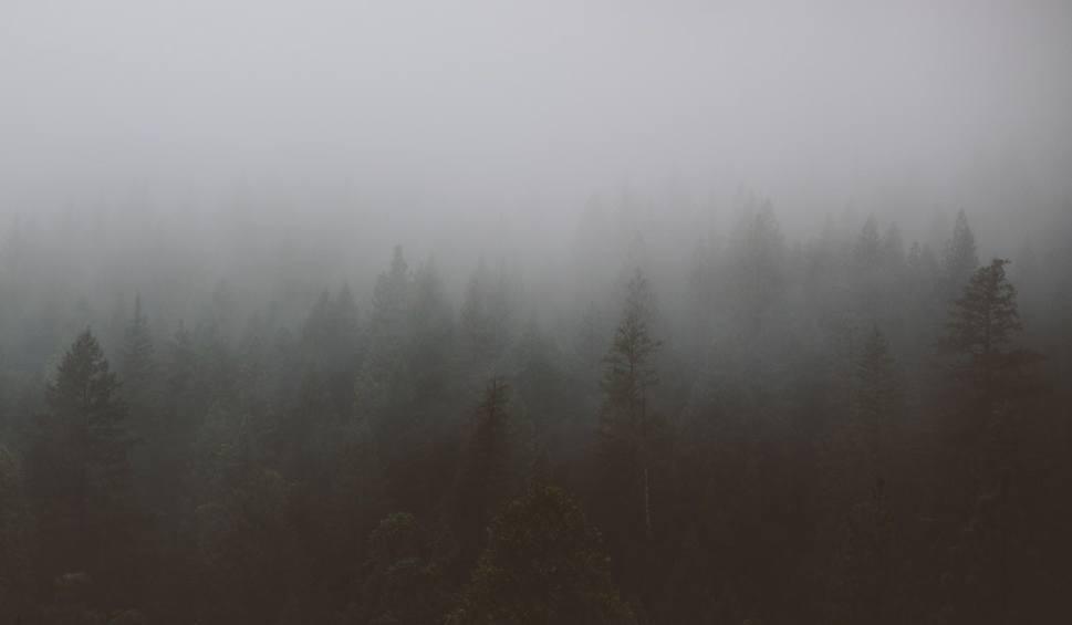 Film do artykułu: Gęsta mgła spowiła woj. lubelskie. Najgorsza widoczność w powiatach: kraśnickim, opolskim i puławskim